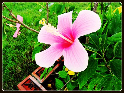 g.pink framed