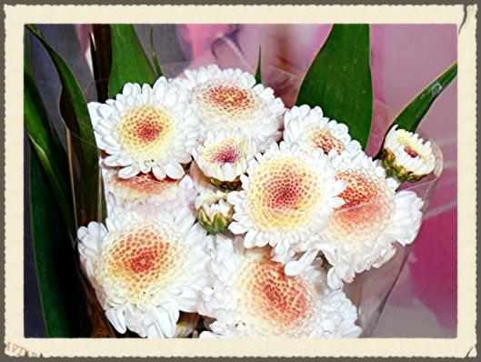 mnflowers7